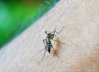 אלה הן הדרכים האידאליות להיפטר מהיתושים