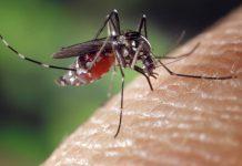 איך מבצעים הדברת יתושים שמבטיחה קיץ שקט באמת?